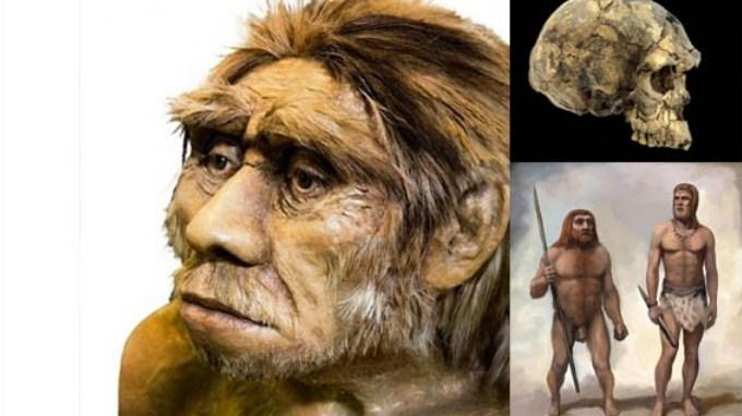Homo wajakenesis