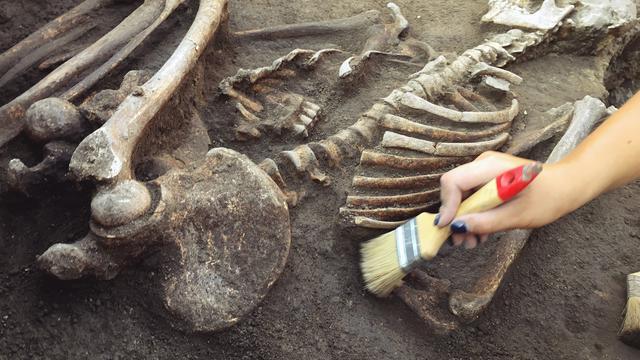 Penemuan fosil di Indonesia